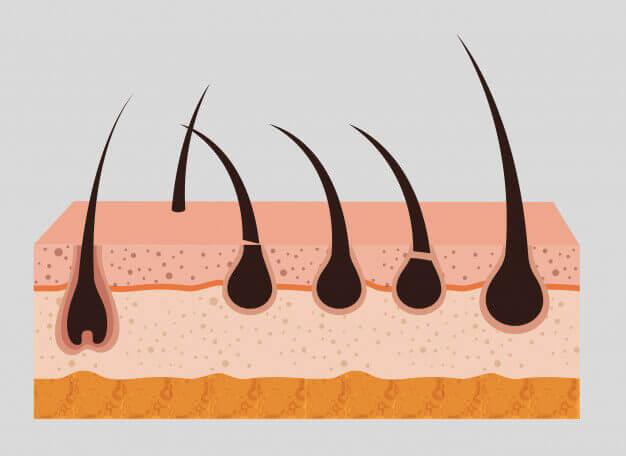 AROMASE-scalp structure (2)